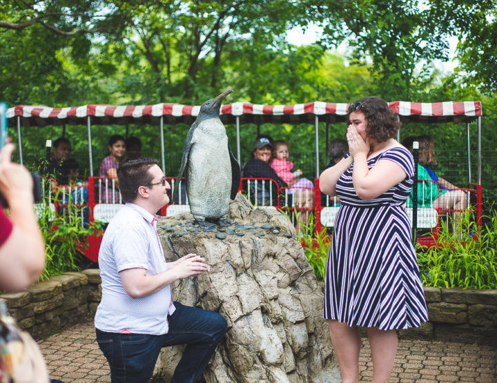 St. Louis Proposal Photography | St. Louis Zoo